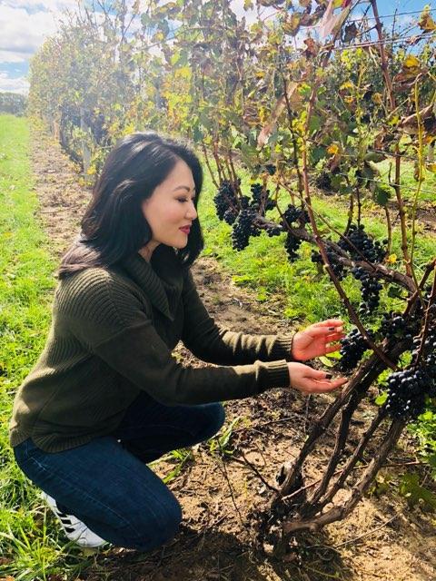 Vineyard at Gravity winery in Michigan